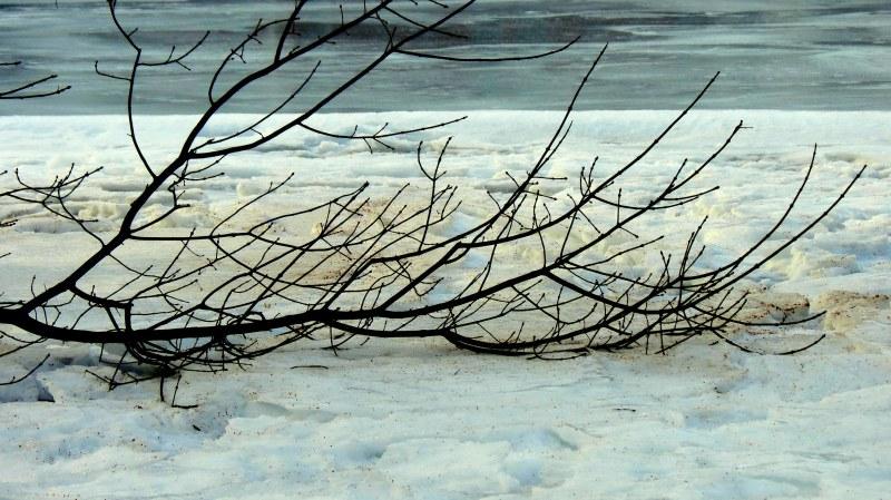 une branche qui ne reviendra pas au printemps