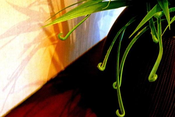 plante artificielle, ombre naturelle