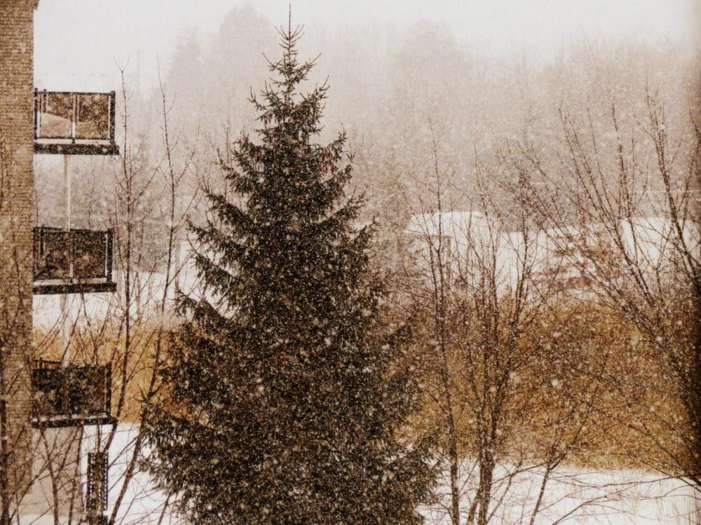 les premières neige