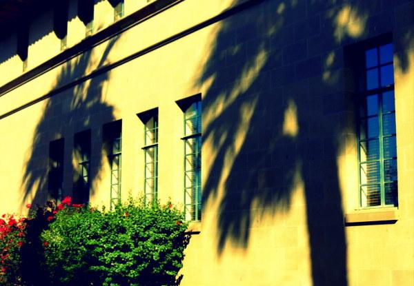 le soleil, la chaleur et les palmiers