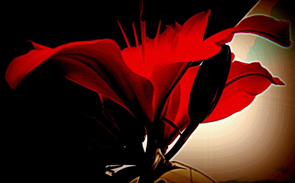 une fleur égarée