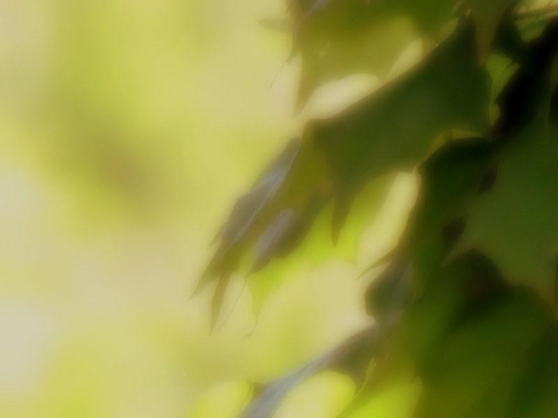 feuilles d'été...enfin