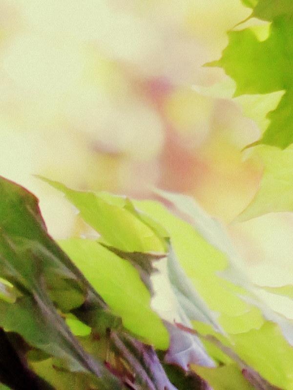 verdure en voie de disparition