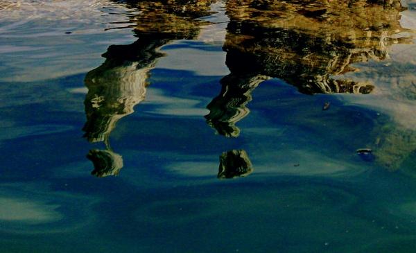bois mort sur l'eau