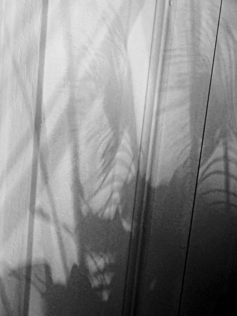 à l'abri derrière le rideau