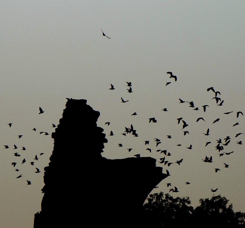 the birds...