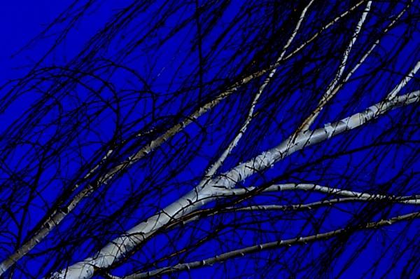 les branches brisées en 3D