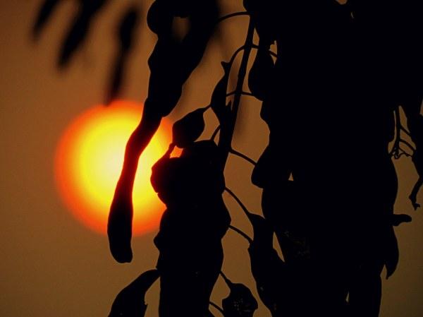 au coucher de soleil