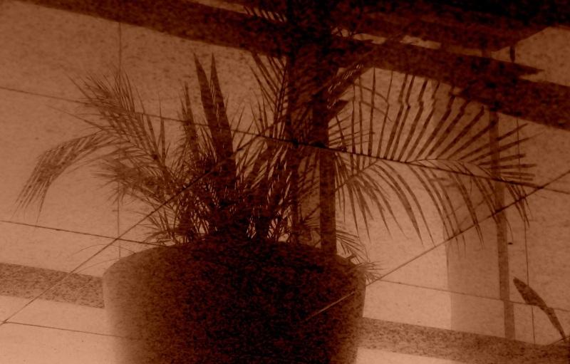la plante imaginaire