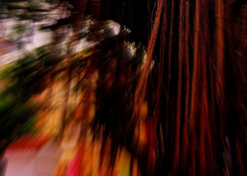 lianas in the jungle