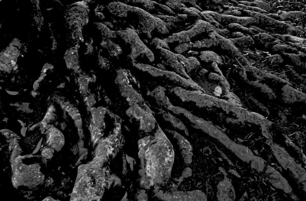 le dernier repli des racines
