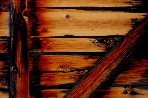 les yeux du bois
