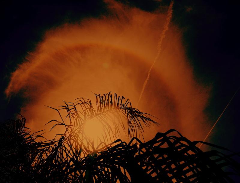 feuillage sur ciel de feu