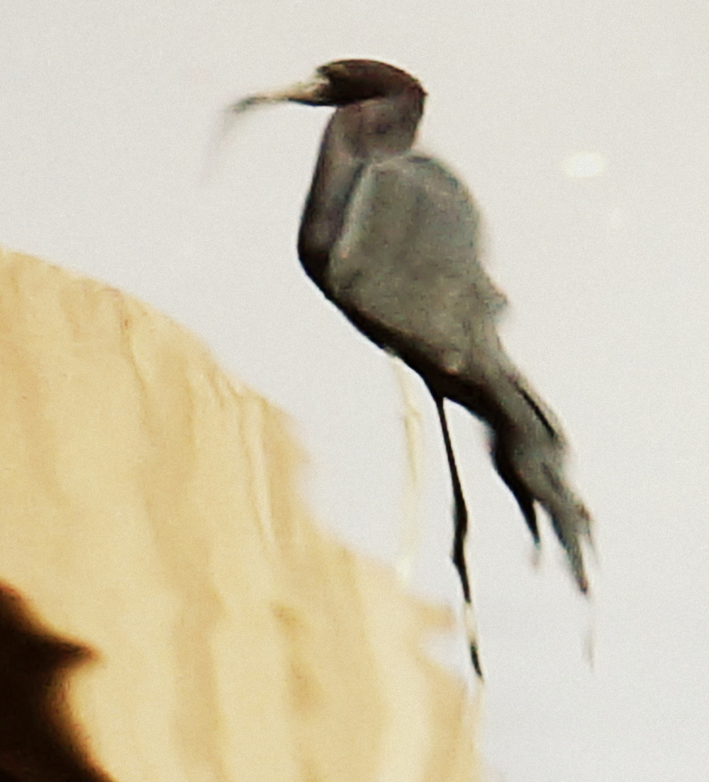 l'oiseau sur l'eau