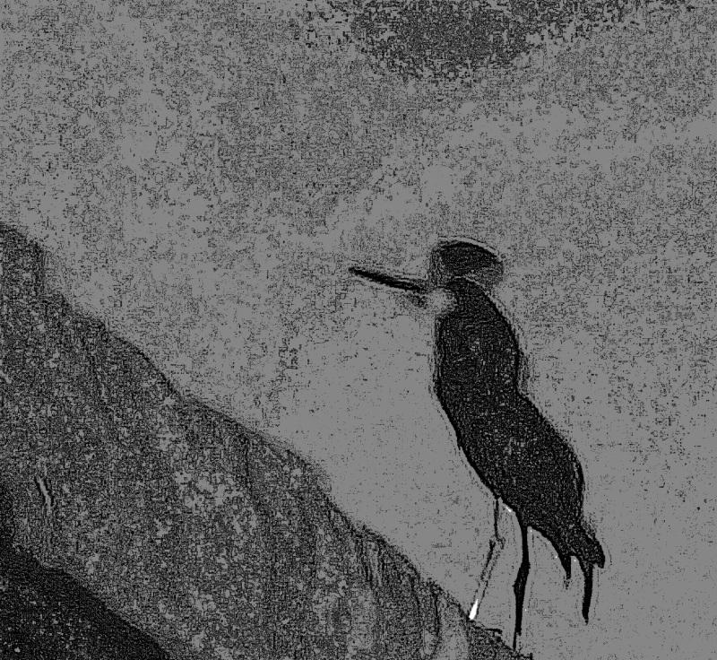 l'oiseau en reflet