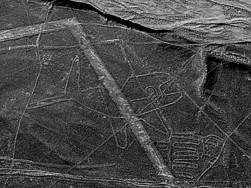 une baleine dans le désert (Nazcar, Pérou)