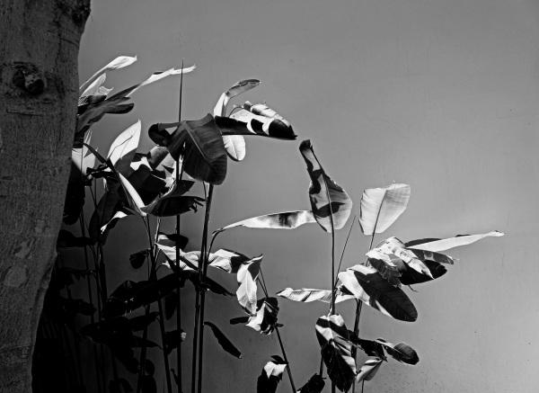 éclairage sur les feuilles