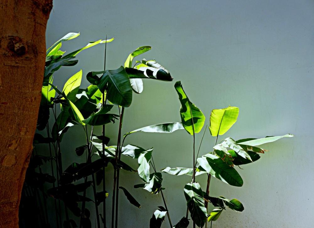 l'arbre et sa verdure