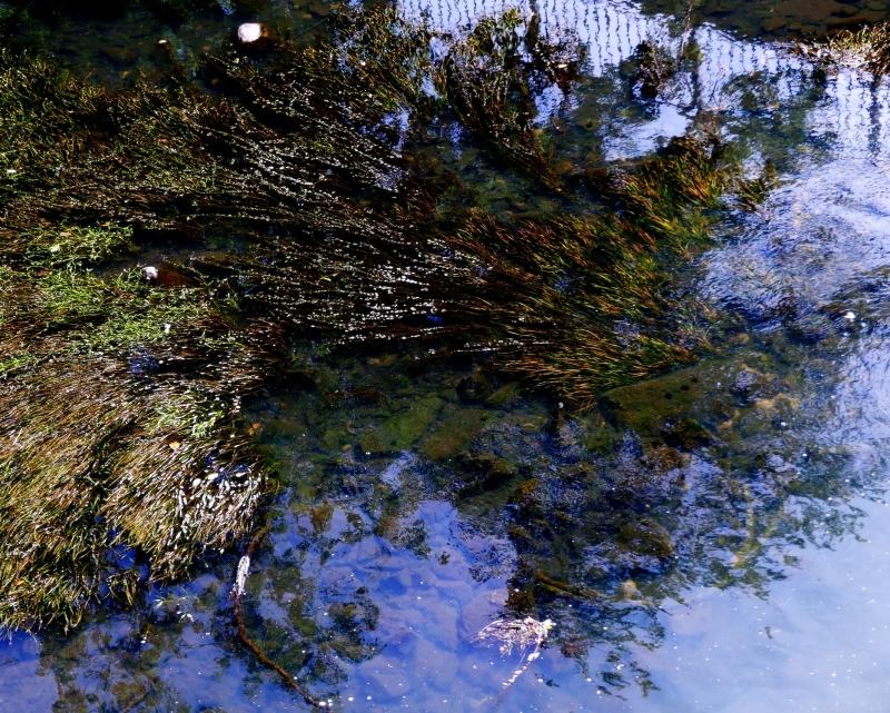 les algues et la clôture