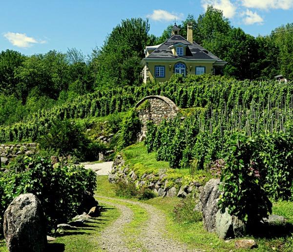 vignoble St-Agnès et ses vignes en terrasses