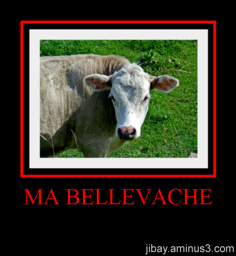 Ma belle vache