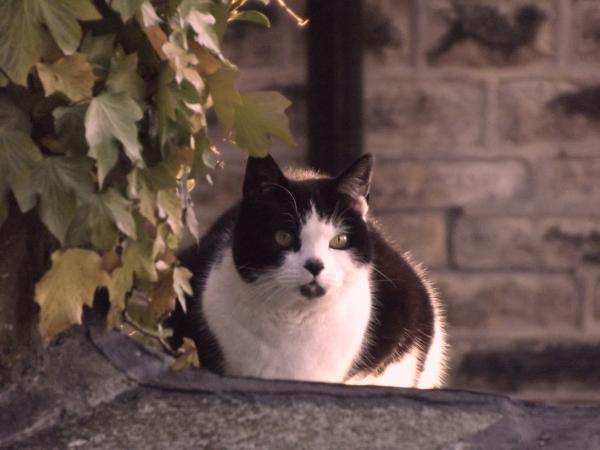 Starey Cat