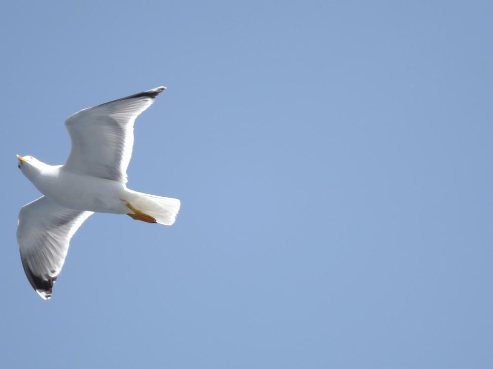 Sithonian Seabird