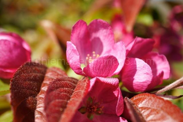 Sayan Gardens 6