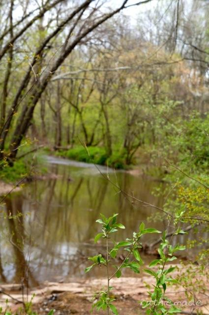 Watershed Walk 7