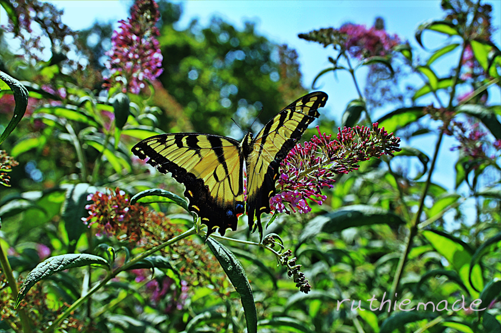 Butterfly on bush 3