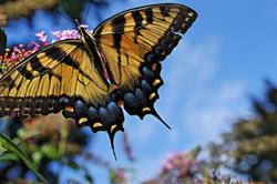 Butterfly on my bush 5