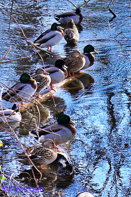 Get Your Ducks in a Row