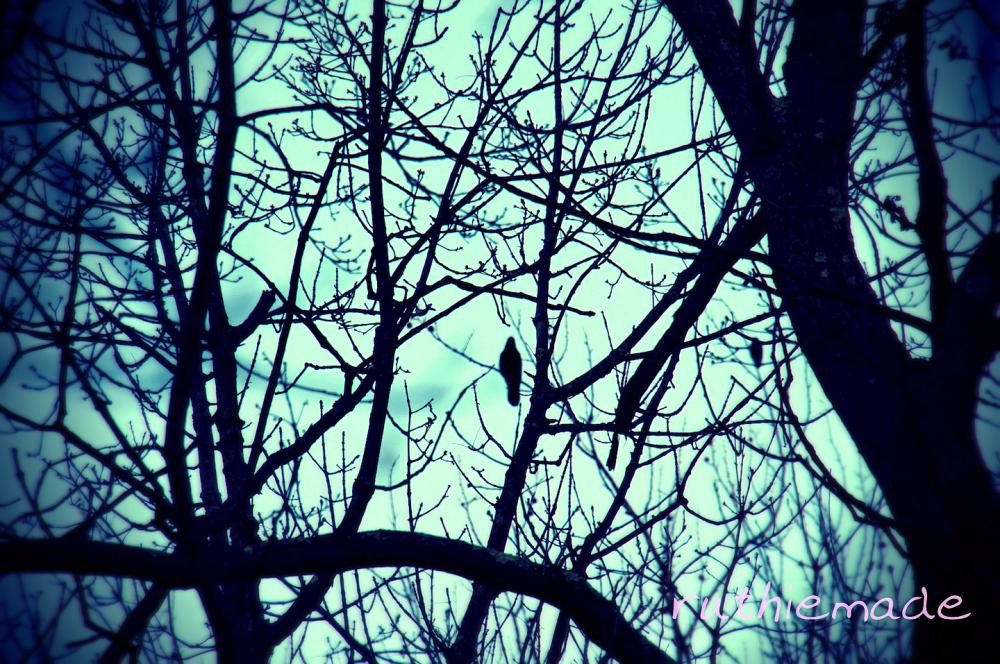 Bird at sunrise