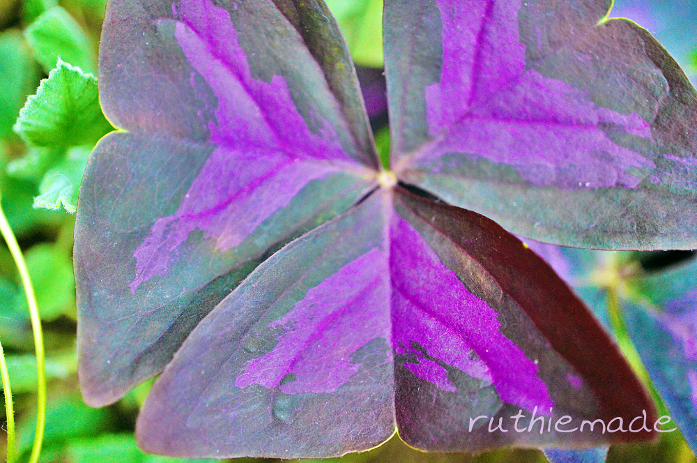 LG Purple Leaves