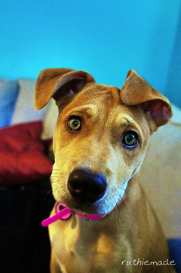Grand Dog Lucy