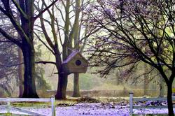 Misty winter Backyard