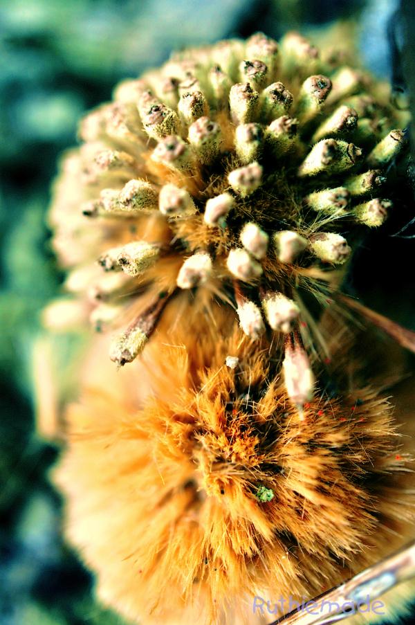 Nature's fuzzballs
