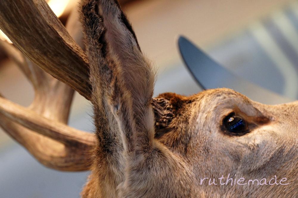 Rest Stop Deer
