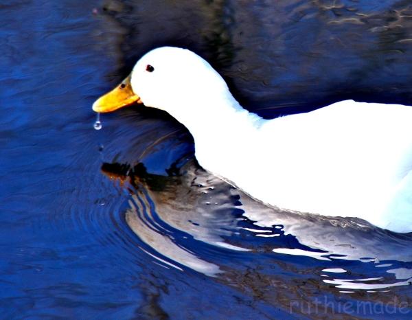 Bubble Duck