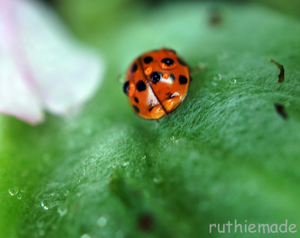 Droplets 4