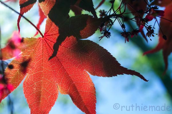 Light on leaf