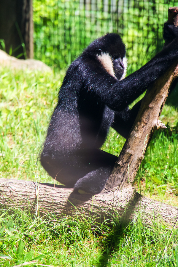 Roger Williams Park Zoo 11