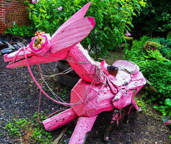 Pink DOnkey