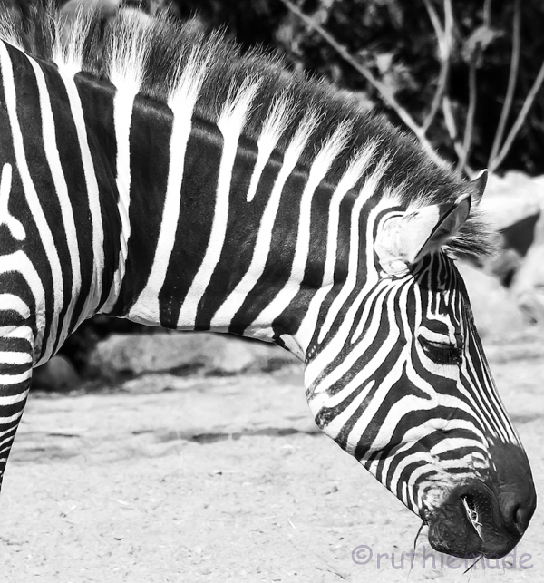 B&W Stripes