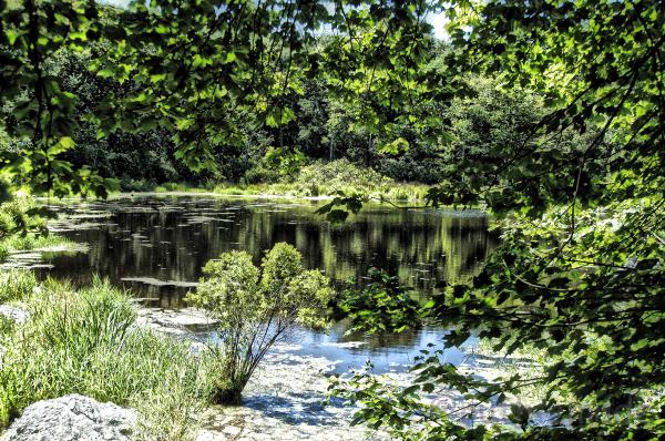 Sunny Pond