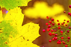 Colors of Fall 1