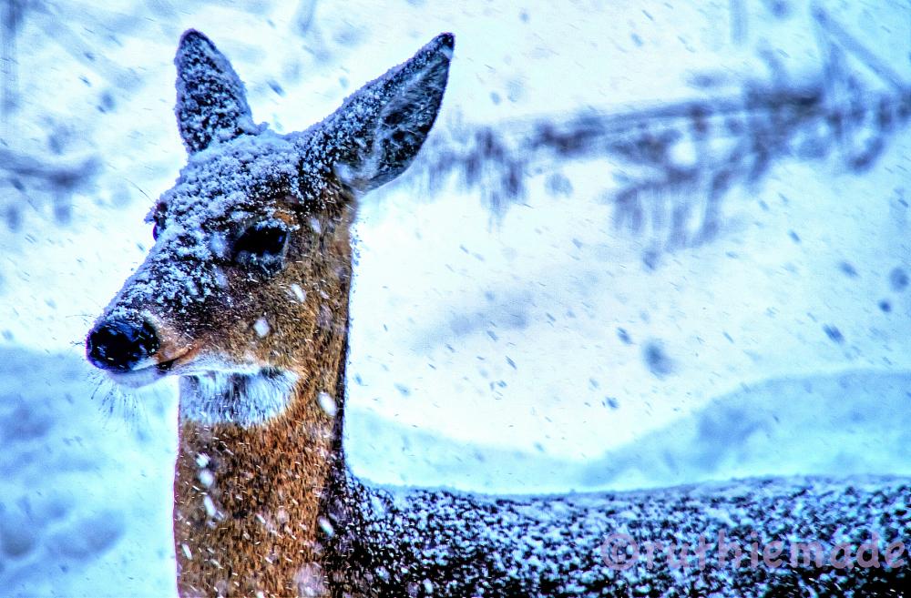 Snowy Deer