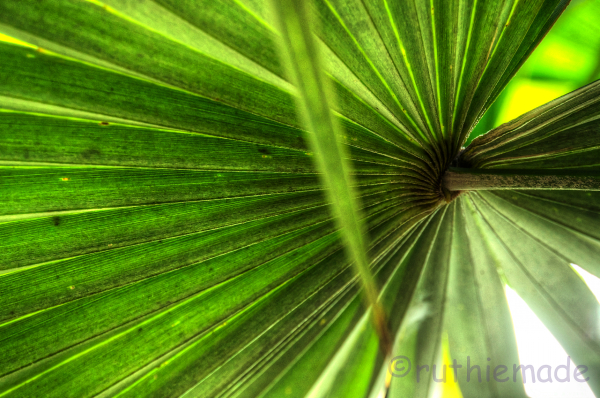Longwood Gardens greens 1