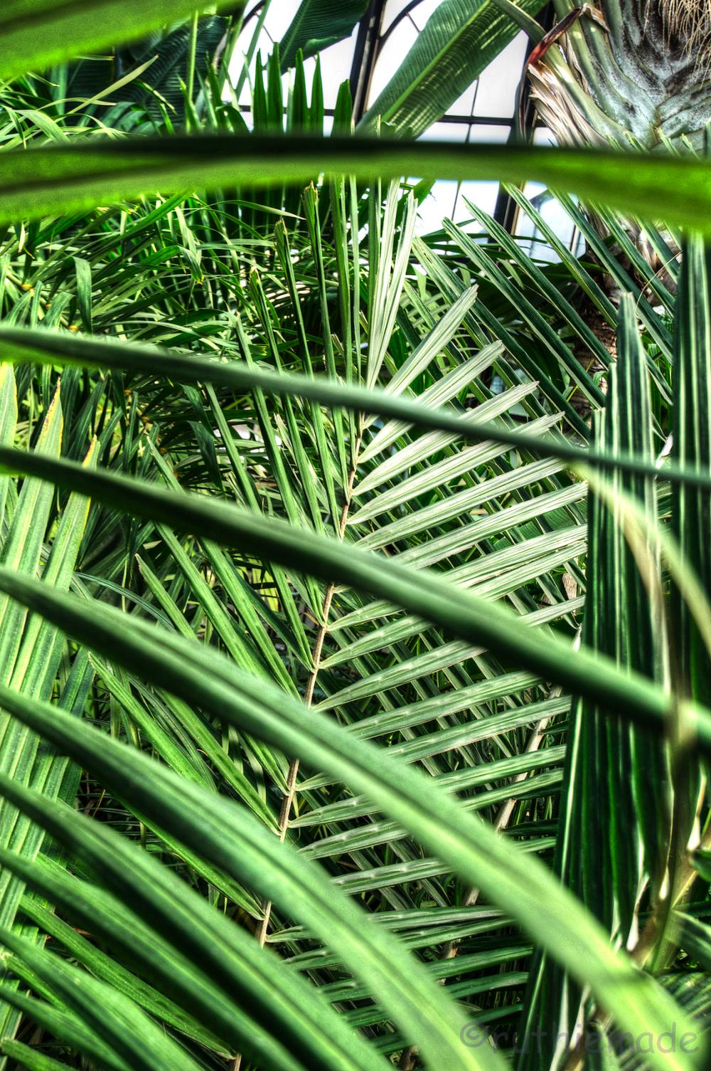 Longwood Gardens Greens 2
