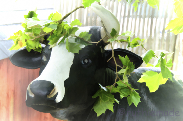 ST Cow